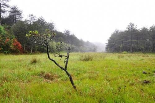 """这里被茂密的松树林分割成大大小小数十个形状各异的""""湖""""泊,当地村民"""